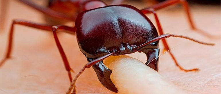 покусали муравьи