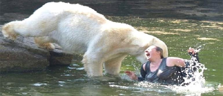 укусил белый медведь