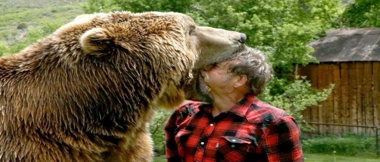 укусил бурый медведь