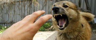 Собака кусает